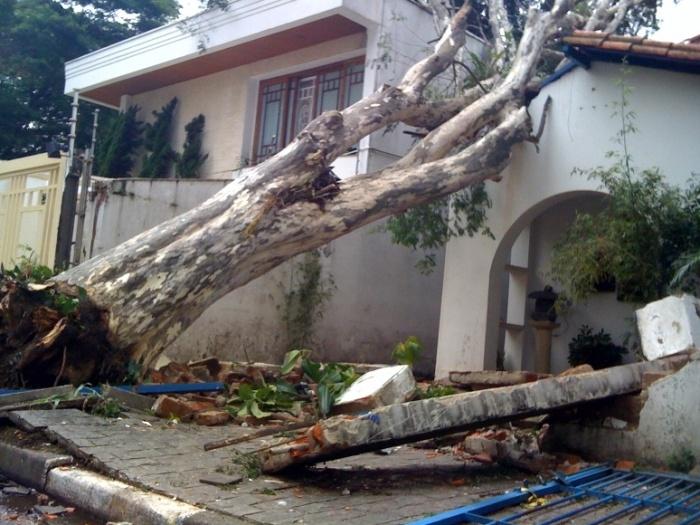 árvore bairro aeroporto 2