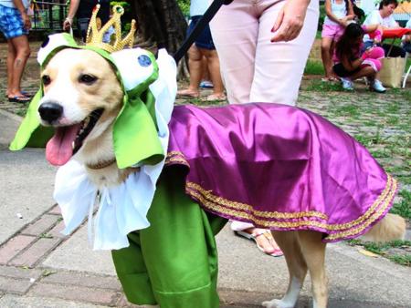 Divulgação/Fest Cães & Pets