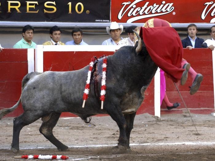Touro ataca espanhol G
